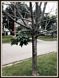 Tree with Life